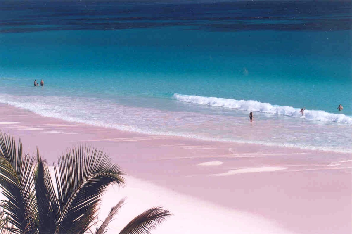 Pink sands bahamas world is the house for Pink sands beach in harbour islands